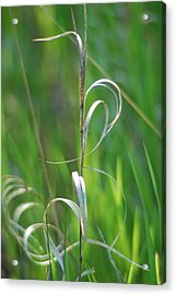 Grass Calligraphy I Acrylic Print