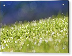 Grass, Close-up Acrylic Print