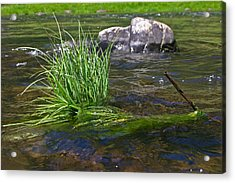 Grass Rock Stick Acrylic Print