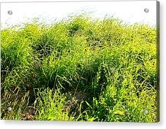 grass. WILD GRASS Acrylic Print by Michael Clarke JP