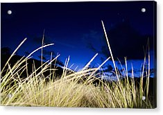 Grasses Acrylic Print by Dexter Fassale