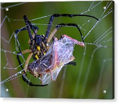 Grasshopper And Spider Acrylic Print by Brian Stevens