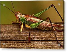 Grasshopper Acrylic Print by Linda Tiepelman