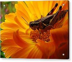 Grasshopper Luncheon Acrylic Print