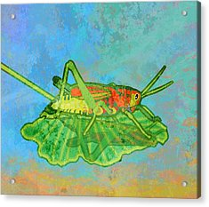 Grasshopper Acrylic Print by Mary Ogle