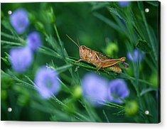 Grasshopper Acrylic Print by Mike Grandmailson