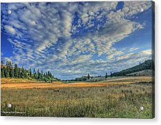 Acrylic Print featuring the photograph Grassy Field by Tyra  OBryant
