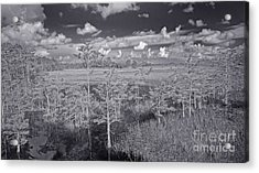 Acrylic Print featuring the photograph Grassy Waters 3 Bw by Larry Nieland