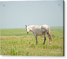 Gray On Prairie Acrylic Print