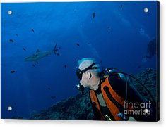 Gray Reef Shark With Diver, Papua New Acrylic Print by Steve Jones