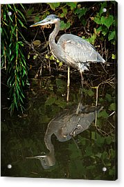 Acrylic Print featuring the mixed media Great Blue Heron 1 by Bruce Ritchie