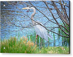 Acrylic Print featuring the photograph Great Blue Heron At Pond's Edge by Mary McAvoy
