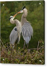 Acrylic Print featuring the photograph Great Blue Heron Couple by Myrna Bradshaw