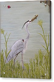 Great Blue Heron Acrylic Print by Jim Ziemer