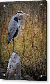 Great Blue Heron On Spool Acrylic Print by Debra and Dave Vanderlaan