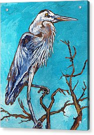 Great Blue Heron Acrylic Print by Sandy Tracey