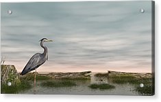 Acrylic Print featuring the digital art Great Blue Heron by Walter Colvin