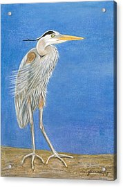 Great Blue Heron Windy Day Acrylic Print by Jeanne Kay Juhos