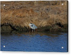 Great Blue Heron7 Acrylic Print