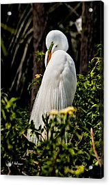Great Egret Acrylic Print by Christopher Holmes