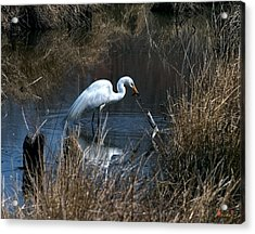 Acrylic Print featuring the photograph Great Egret With Fish Dmsb0034 by Gerry Gantt