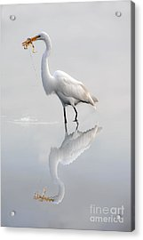 Acrylic Print featuring the photograph Great Egret With Lunch by Dan Friend
