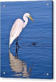 Great Egret With Shrimp Acrylic Print