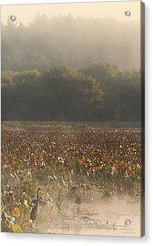 Great Meadows National Wildlife Refuge Blue Heron Fog Acrylic Print by John Burk