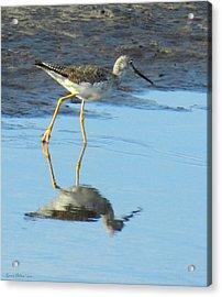 Greater Yellow Legs Acrylic Print
