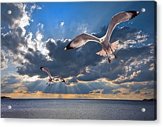 Greek Gulls With Sunbeams Acrylic Print by Meirion Matthias