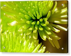 Acrylic Print featuring the photograph Green Alien Flower by Tanya Tanski