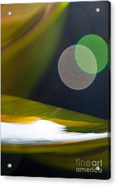 Green And Gold Abstract Acrylic Print by Dana Kern