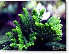 Green Acrylic Print by Aunit Sharma