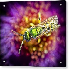 Green Bee Acrylic Print by Vicki Jauron