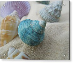 Green-blue Shell In The Sand Acrylic Print