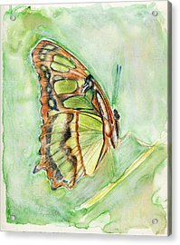 Green Butterfly Acrylic Print by Linda Pope
