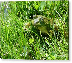 Green Acrylic Print by Christine Stack