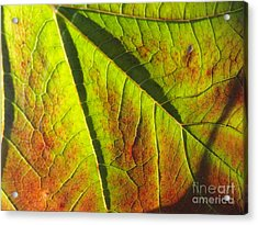 Green Days Past Acrylic Print by Trish Hale