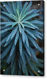 Green Dew Acrylic Print by Dickon Thompson