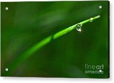 Green Drops Acrylic Print by Sylvie Leandre
