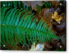 Acrylic Print featuring the photograph Green Fern by Tikvah's Hope