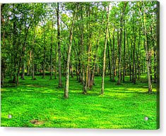 Green Floored Forest Acrylic Print by Jackie Novak