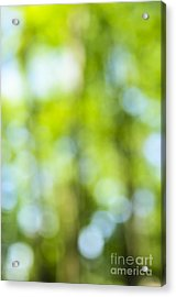 Green Forest And Blue Sky Acrylic Print by Elena Elisseeva