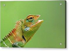 Green Forest Lizard Acrylic Print by Saranga Deva De Alwis
