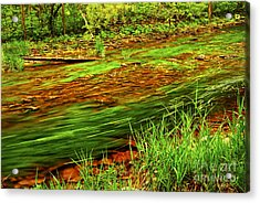 Green Forest River Acrylic Print by Elena Elisseeva