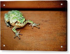 Green Frog With Gold Rimmed Black Eyes Acrylic Print by R. Nelson