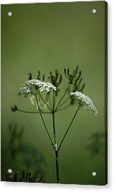 Green Garden Acrylic Print by Dickon Thompson