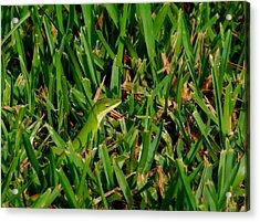 Green Grass Guise Acrylic Print by April Wietrecki Green