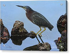 Green Heron Visiting The Pond Acrylic Print by Deborah Benoit