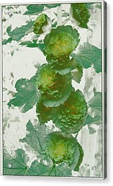 Acrylic Print featuring the photograph Green Hollyhocks by Tom Wurl